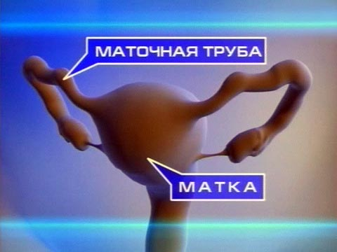 маточная труба