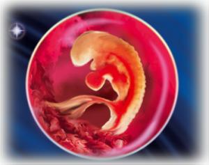 Как в 3 недели симптомы беременности